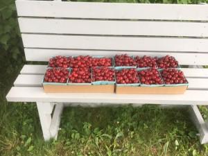 12 quarts of cherries - Copy
